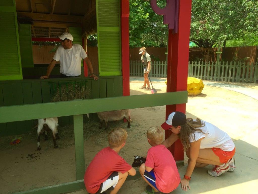 Fun petting the animals